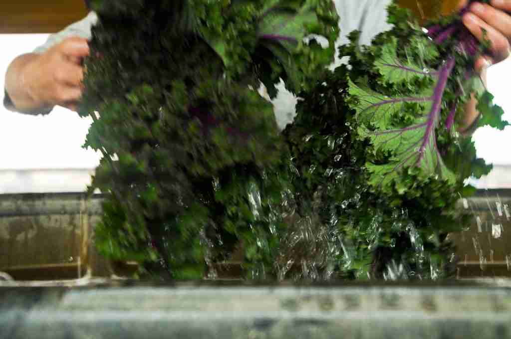 Kale dunked in cold water is a form of hydrocooling on a micro scale.